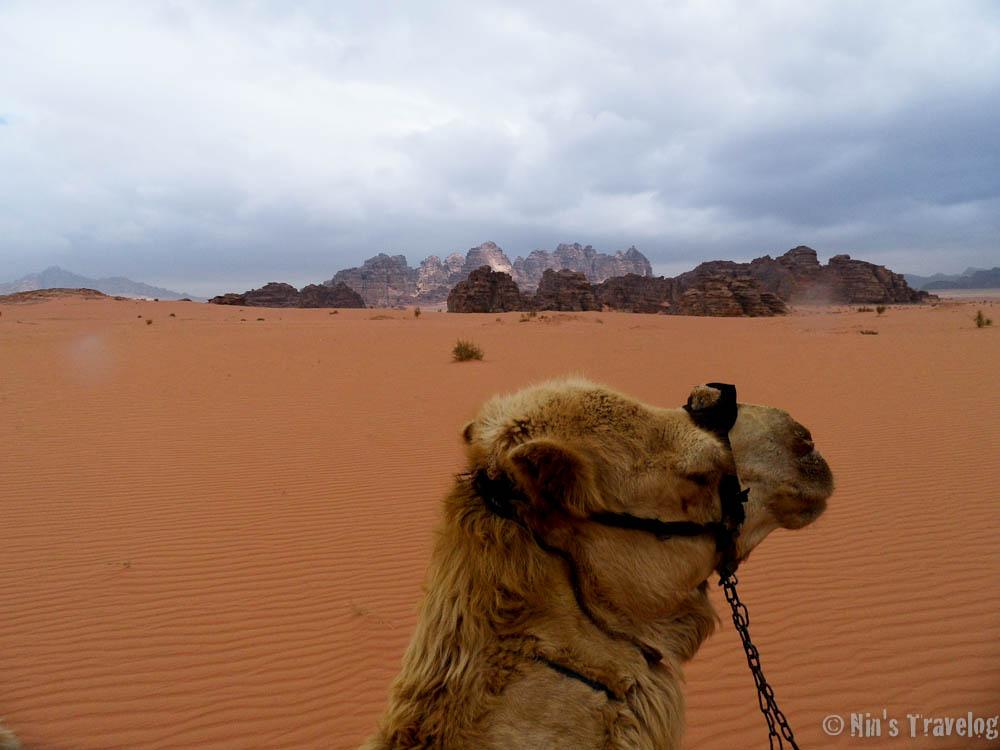 My camel walking across Wadi Rum