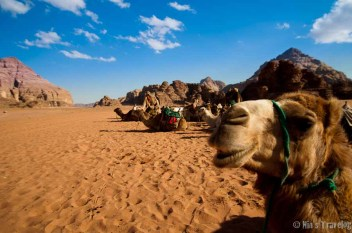 The Camels that wait for us