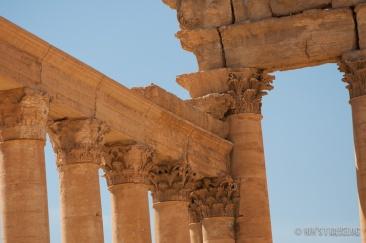 Palmyra-11