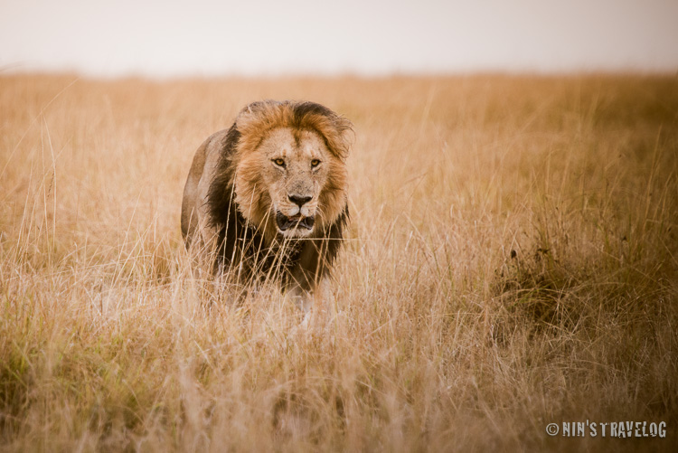 A new photography genre that come to my interest, Wildlife Photography