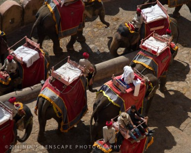 Elephant Rides are still popular in India, even though many Animal Protection organizations are against this...