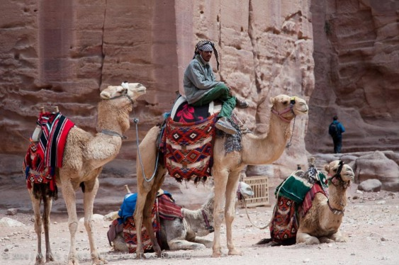 Petra Bedouins offering rides to the tourists