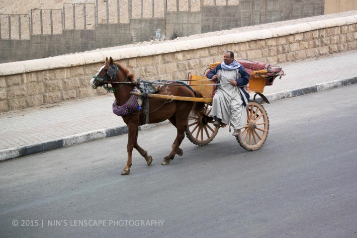 Just outside our hotel, an overworked horse pulling a carriage trying to take us for a ride